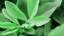 Alfalfa Meal / Pellets